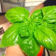 A handful of basil