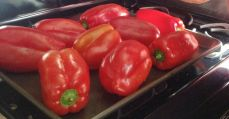 Peppers, ready to roast.